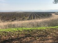 agricultural land in Israel